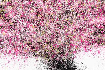 Lieu Nguyen_Cherry Blossom